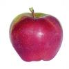 Jablka Gloster (krabice 17kg)