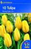 501874 / 8601 Tulipány Triumf žluté 10ks